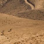 5 Feb 2014 (42)בת מצווה חורפית במדבר